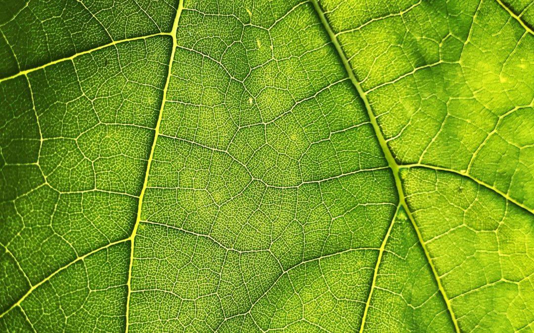 Private sector grote rol in behalen klimaatdoelen